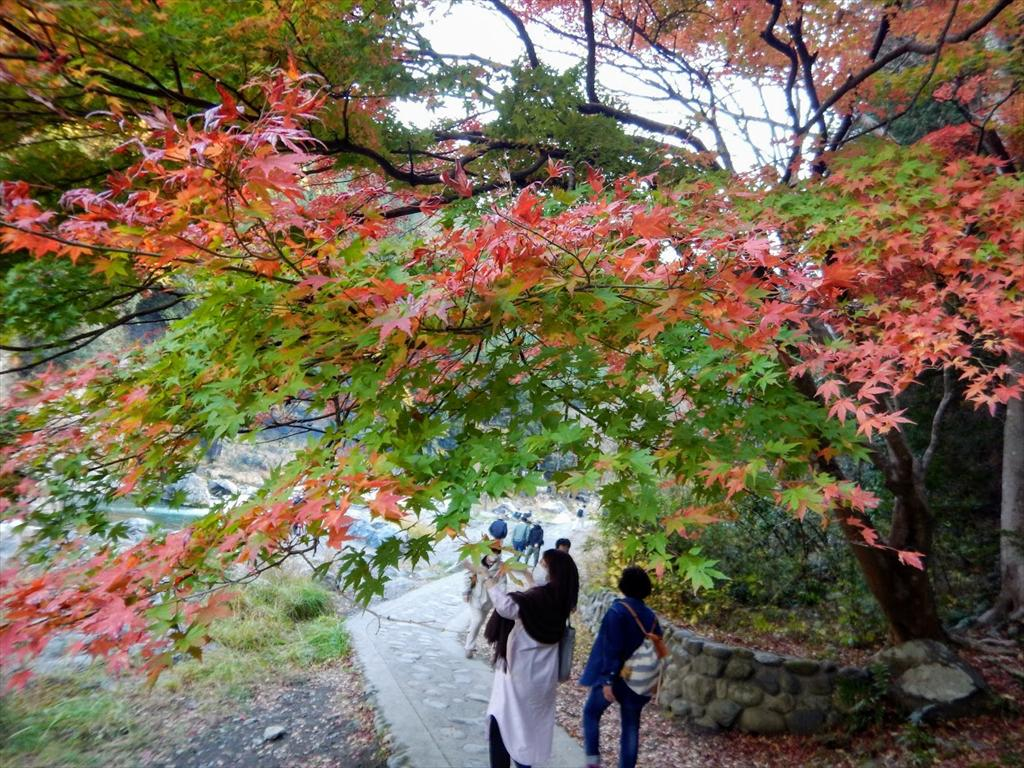 https://hayashida.jp/o/images2019-/DSCN4928_R.JPG