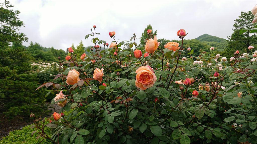 https://hayashida.jp/o/images2019-/DSC_0031_R.JPG