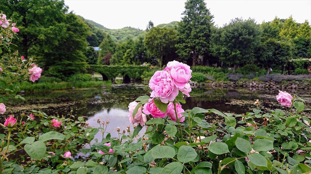 https://hayashida.jp/o/images2019-/DSC_0040_R.JPG