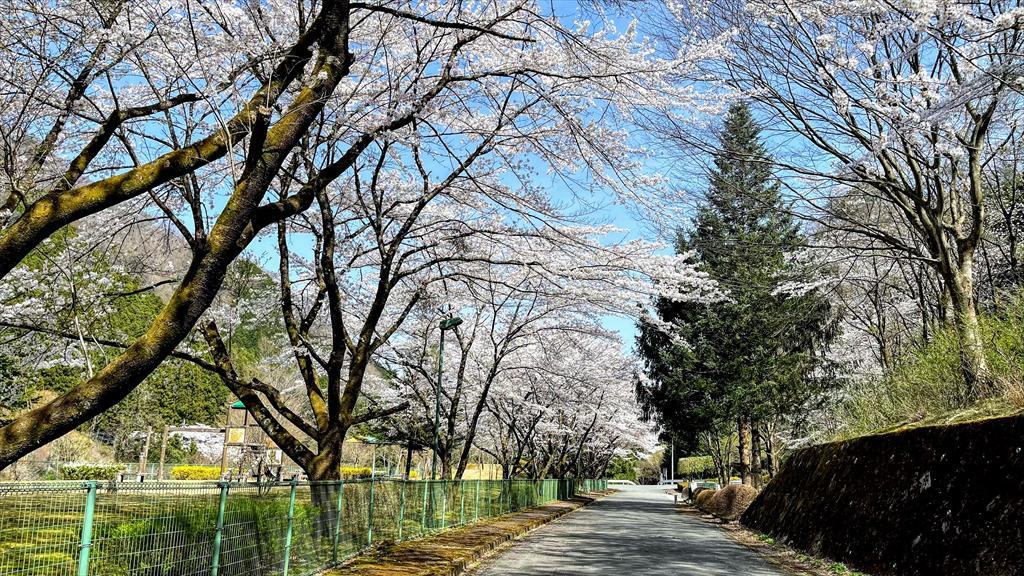 https://hayashida.jp/o/images2019-/IMG_2673_R.JPG